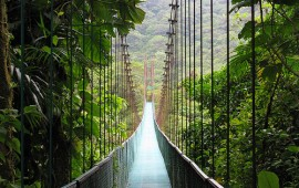 monteverde-cloud-forest-reserve-suspense-bridge
